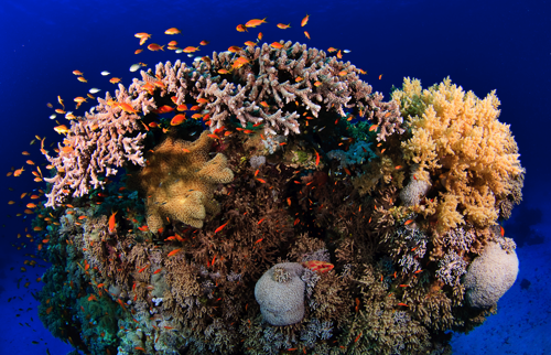 Unterwasserfotografie - mit der Kamera auf Tauchstation