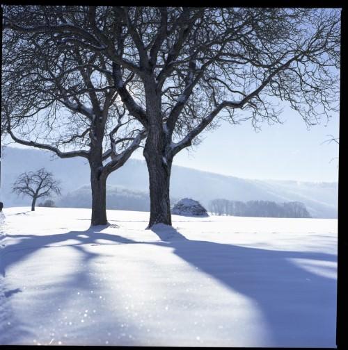Winterszene mit der Hasselblad 500c/m auf Fuji REALA 100 - unbearbeitet