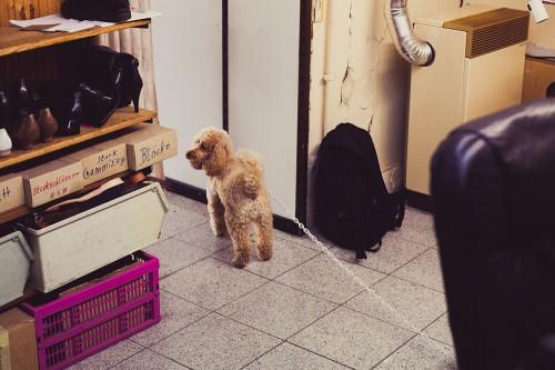 Schumacherei: Der Hund