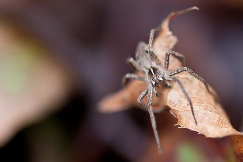 Makrofotografie, Insekt, Nah, Nahaunahme