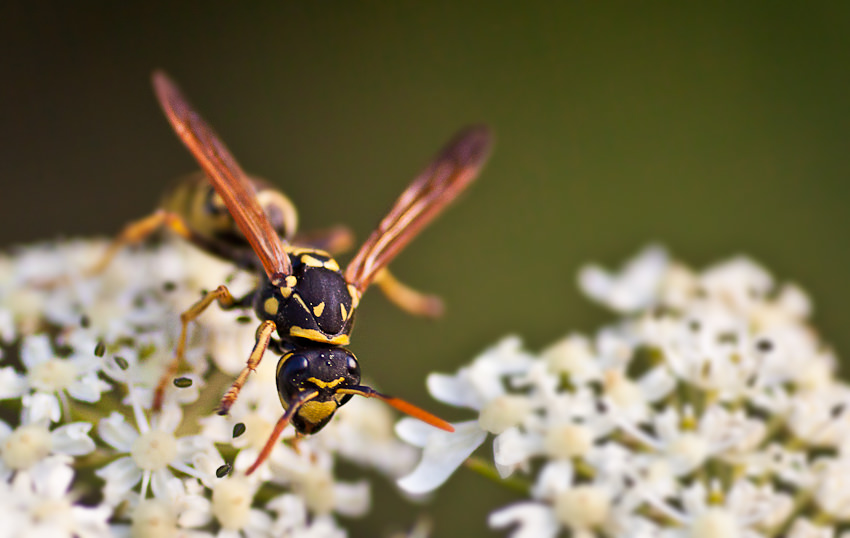 Makrofotografie, Insekt, Wald, Makro, Nahaufnahme