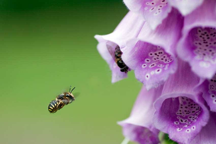 Makrofotografie, Insekt, Nahaufnahme