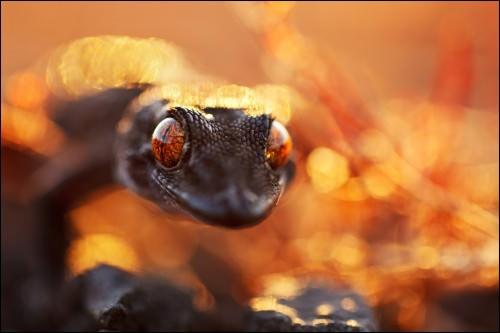Gegenlicht in der Naturfotografie: Bild 1