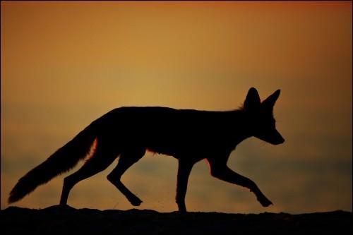 Gegenlicht in der Naturfotografie: Bild 2