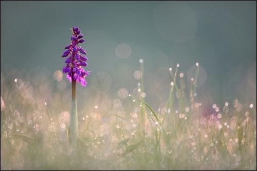 Gegenlicht in der Naturfotografie: Bild 7
