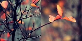 rote Blätter an einem Strauch