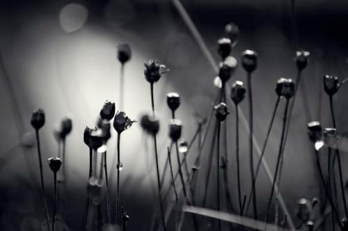 Natur mal anders: Einsam 3