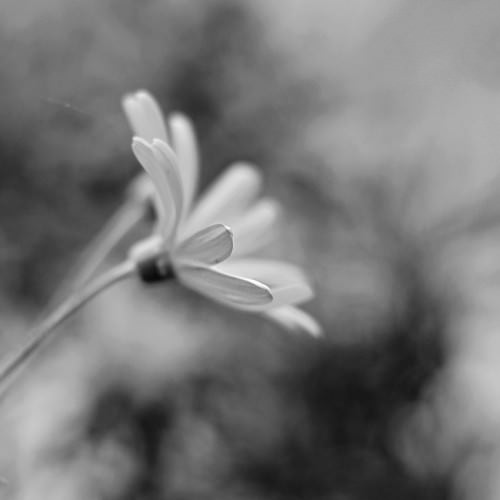 Natur mal anders: Einsam 4