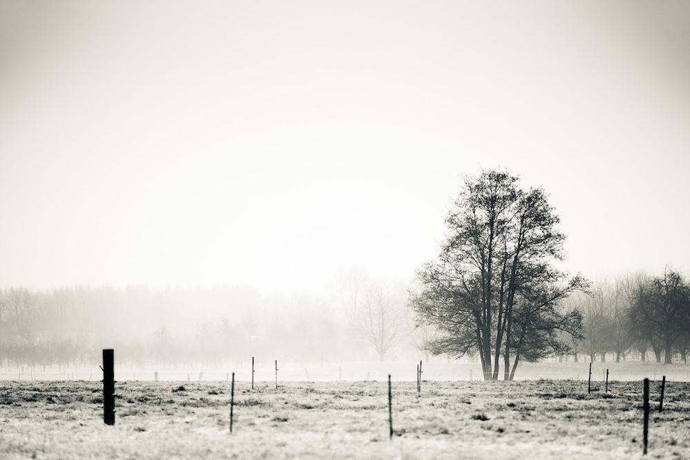Baum hinter Weidezaun, 200mm, Offenblende, Landschaft