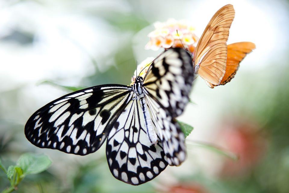 Ein Schmetterling in einer Makro-Fotografie