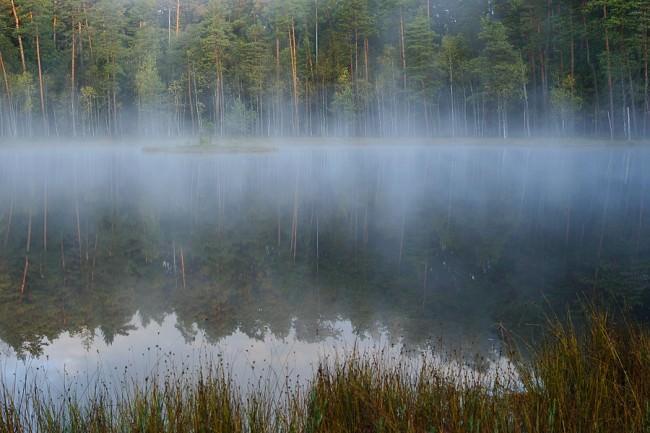 Ein Spiegelbild vom Wald