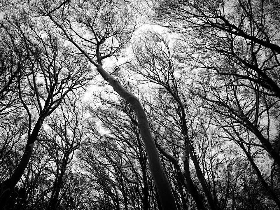 Eine Aufsicht zu vielen, dunklen und blätterlosen Bäumen