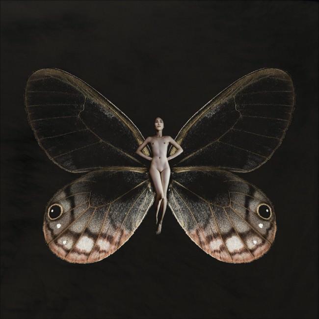 Schmetterling TuAn
