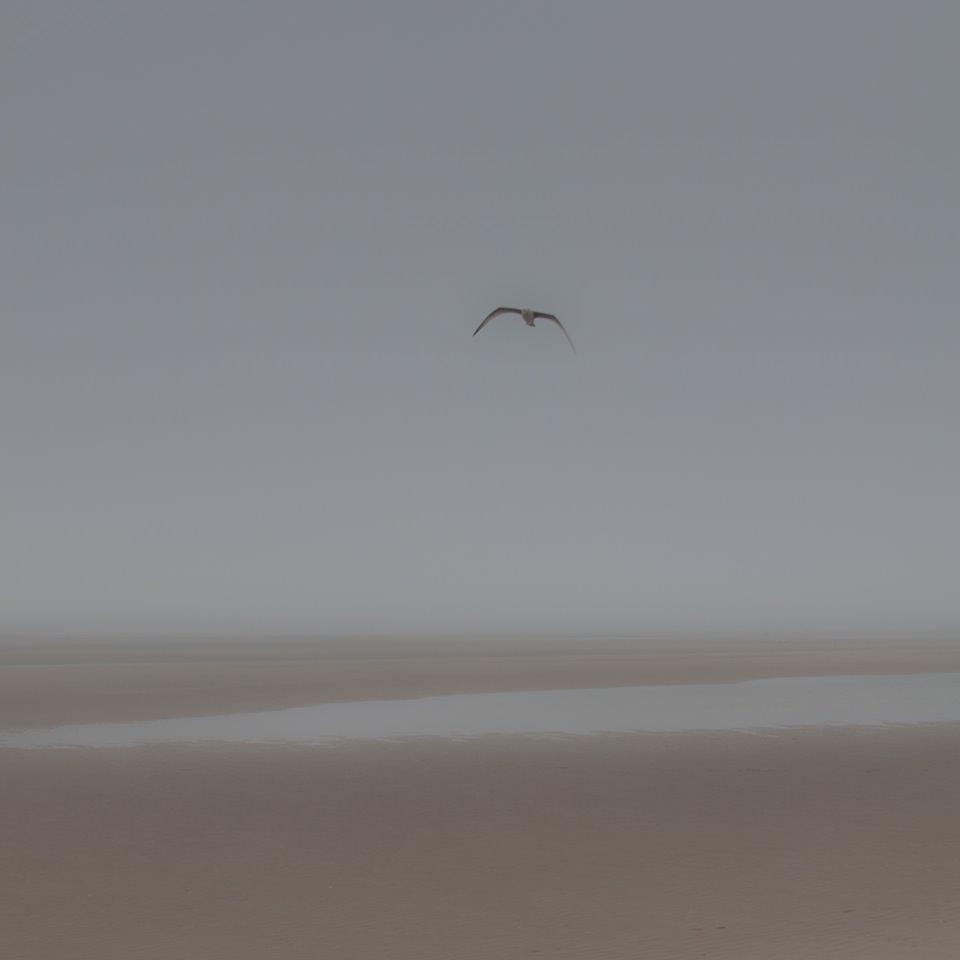 Eine Möwe schwebt an einem Strand in der Luft - ein weiches Foto mit Nebel