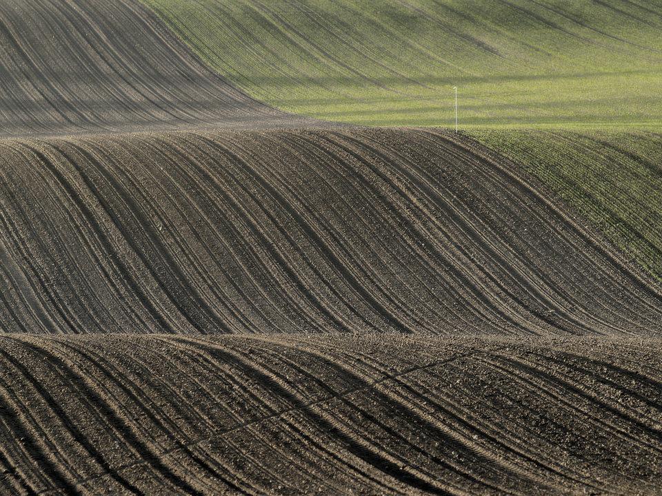 Ein Feld  (14)