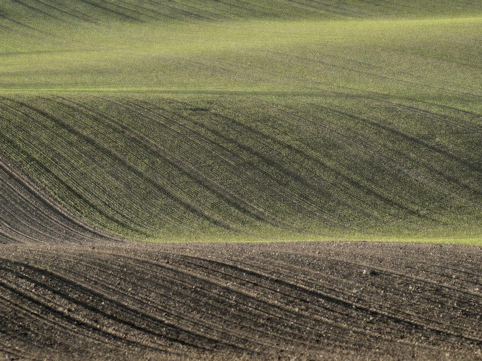 Ein Feld  (10)