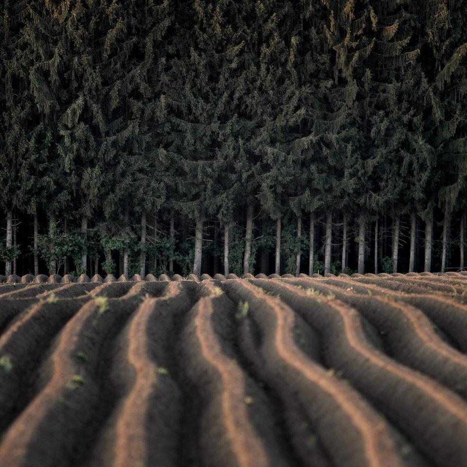 Ein Feld  (5)