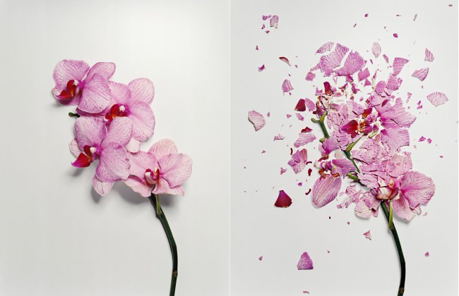 Diptychon einer Blume und einer zerbrochenen Blume