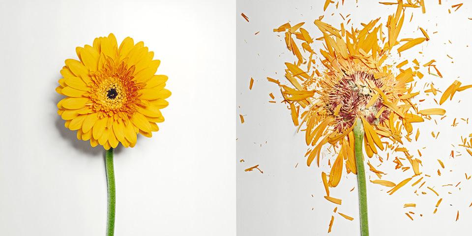 Zerbrochene Blumen