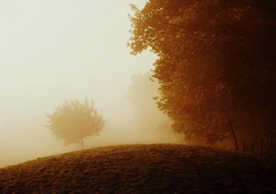 Ein Baum steht im Nebel neben einem Wald