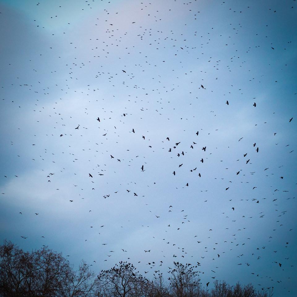 Hier sind hunderte Vögel zu sehen, die fast alle in der Luft sind