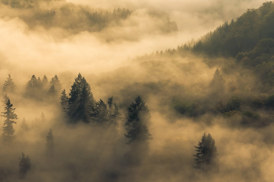 Fog © Karsten May