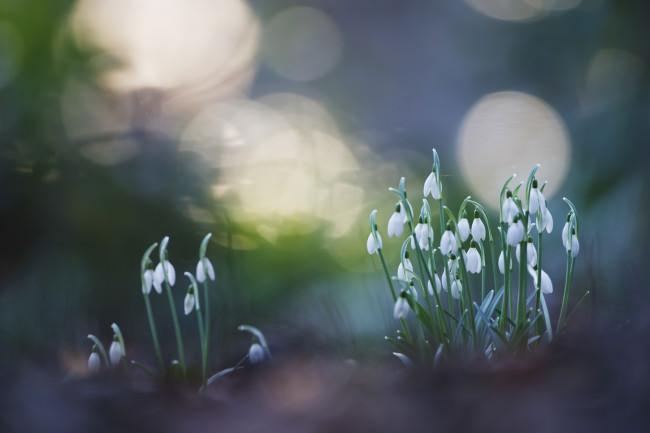 Frühling © Kevin Winterhoff & Hermann Hirsch
