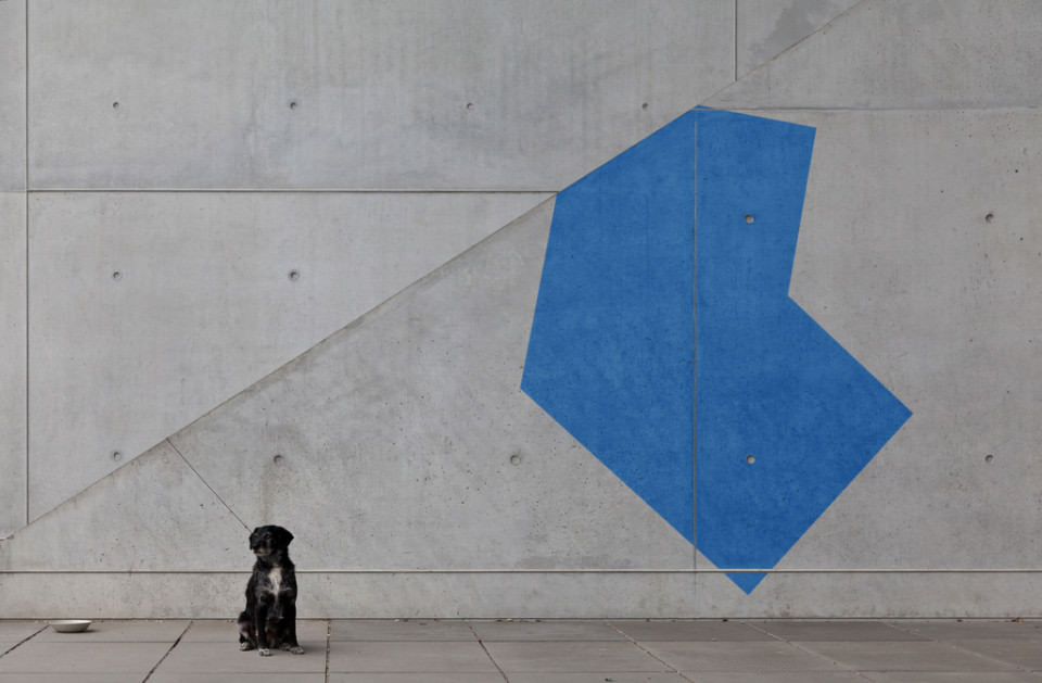 Black Dog and Blue Shape