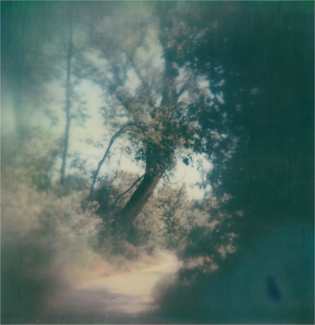 ambush © Jill Auville
