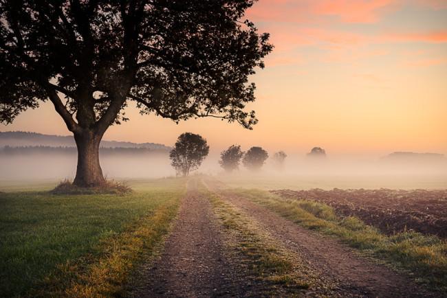 Nebelpfad - © Stefan Hefele
