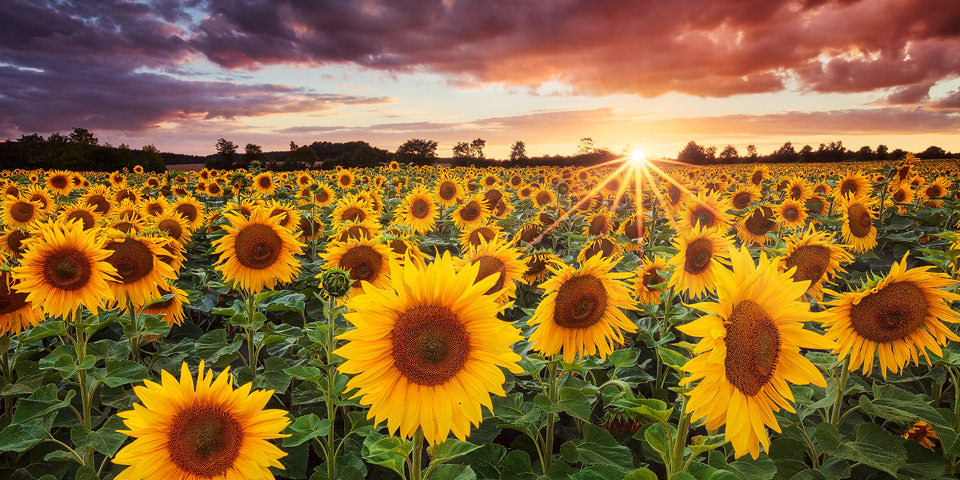 Sunshine, copyright Michael Breitung