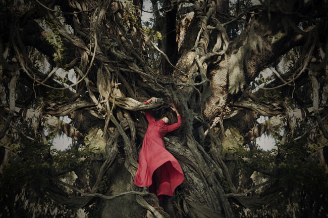 rooted © Heather Evans Smith