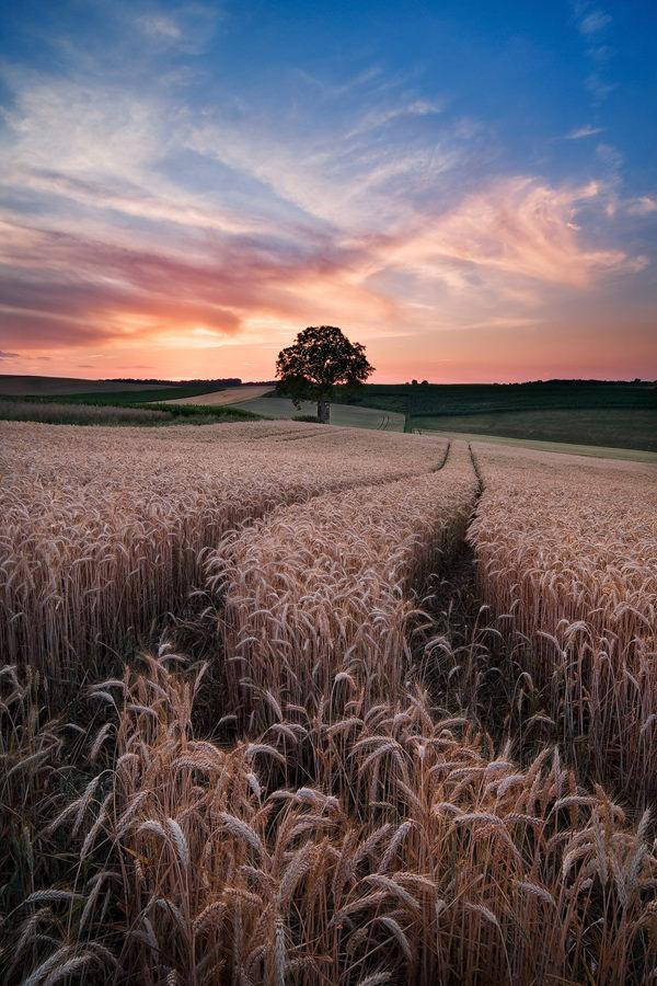 Summer Glow © Michael Breitung