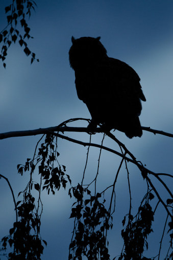 Uhu-Silhouette © Kevin Winterhoff