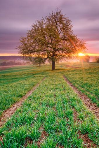 Kraichgau Sunrise © Michael Breitung