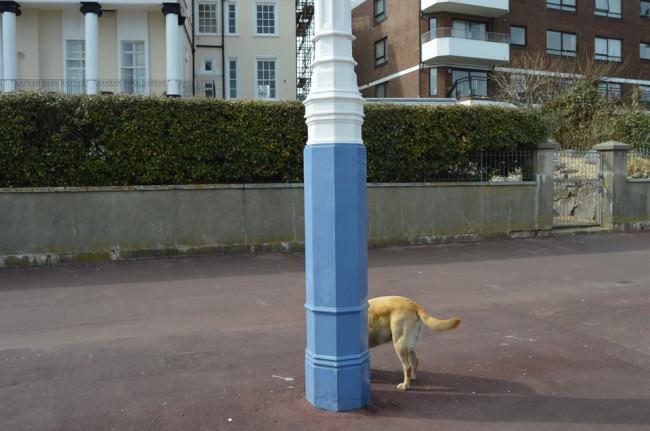 Halfdog |Weymouth © Paul Russell