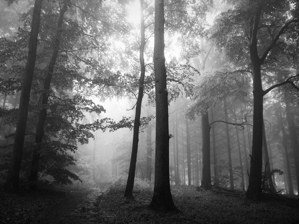 Solitary © Bernd
