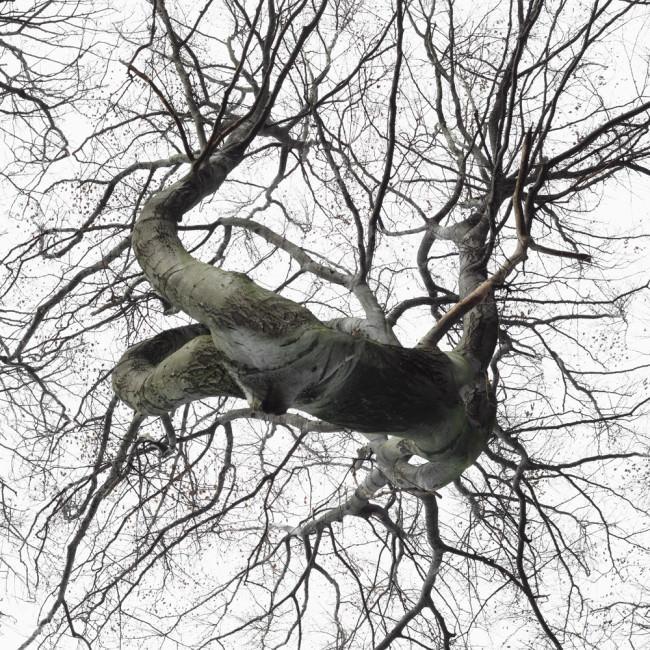 Baum Wald Luft Holz Weite Photoshop Dichte Surreal
