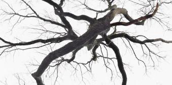 Baum Wald Surreal Photoshop Dicht