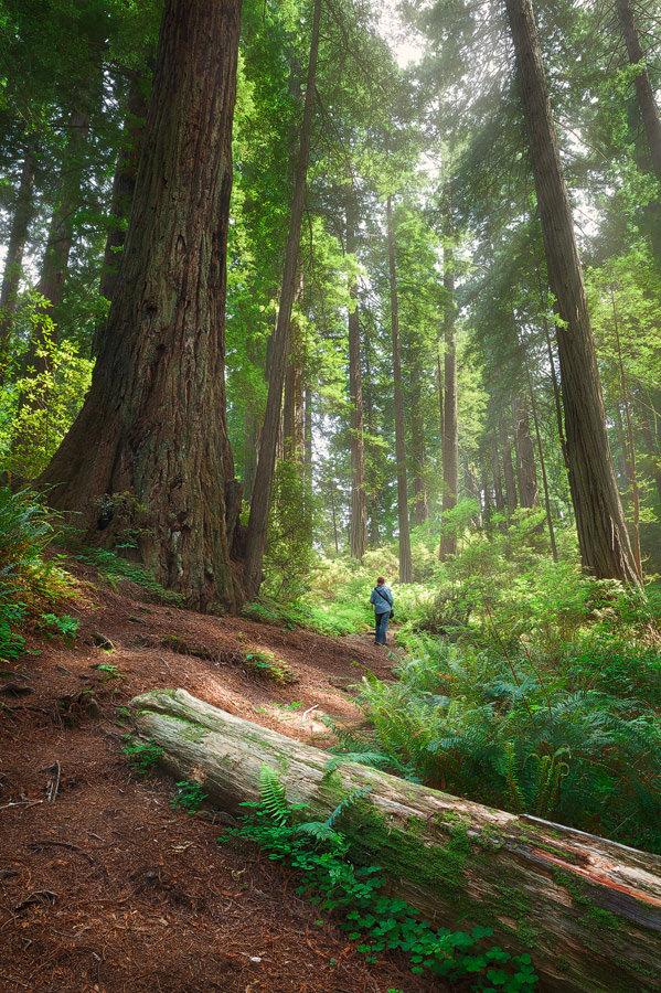 Walking amongst Giants © Michael Breitung