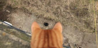 Cat, Street, Streetphotography, Strange, Unfamiliar, Katze, Oben, Blick, Herunter