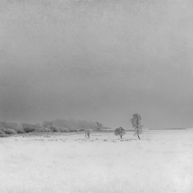 Frost © Jana Mänz