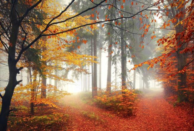 Herbstwald © Kilian Schönberger
