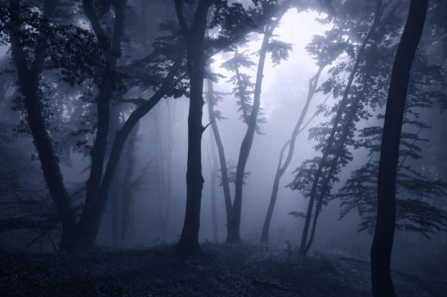 Nachtwald - © Kilian Schönberger