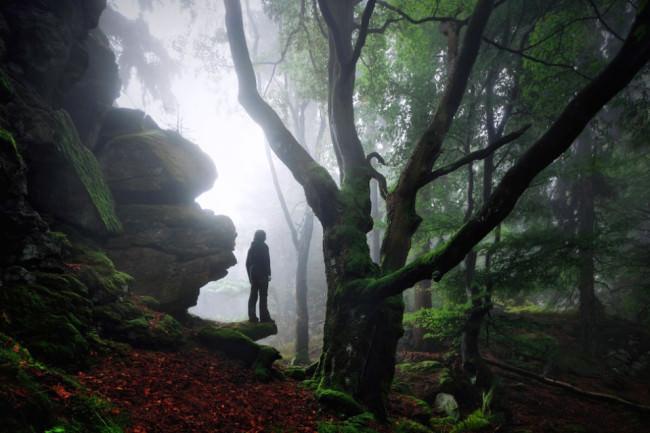 Wandererwald © Kilian Schönberger