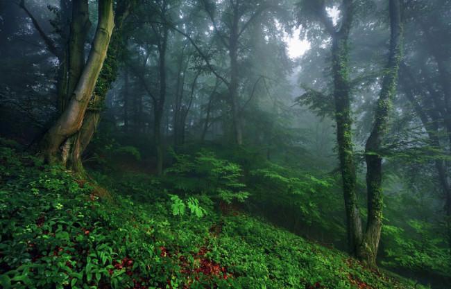 Wald © Kilian Schönberger