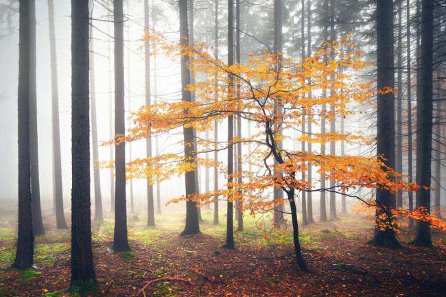 Herbst | Laub | Wald © Kilian Schönberger