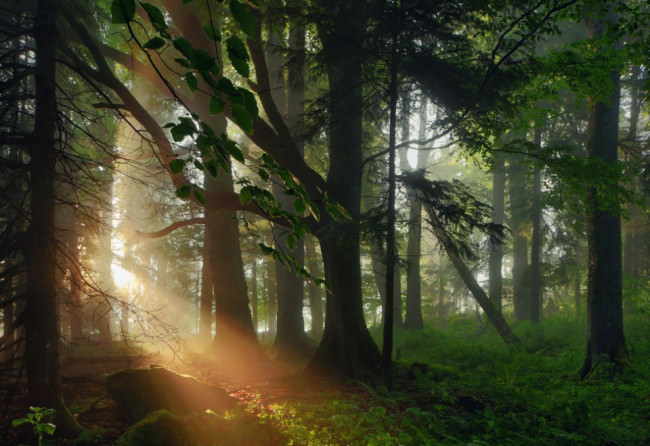 Sonne | Wald © Kilian Schönberger
