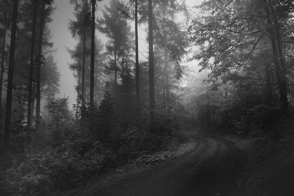 Wald, Nebel, schwarzweiß, blätter, Blatt, Weg, düster, Düsterheit, Dunkelheit, Landschaftsfotografie, neblig, Nebel im Wald, Daniel Book