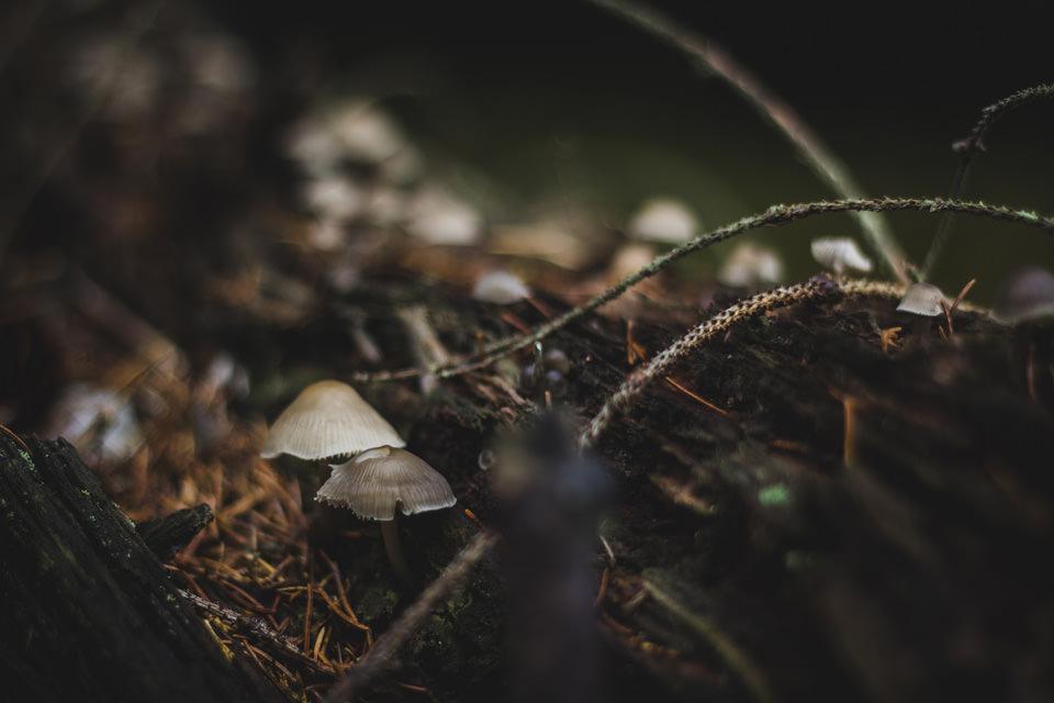Toadstool © Michael Wolf